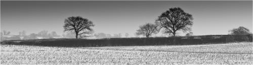 Bob Colman Winter trees