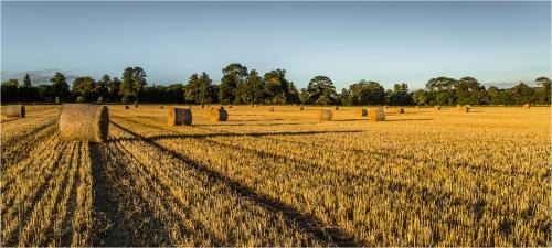 Glen Parker Shifnal Harvest