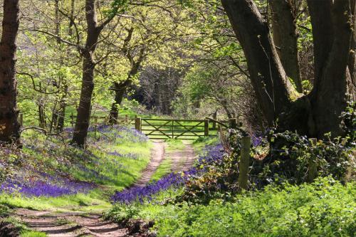 Mick Richardson Staffordshire Woodland