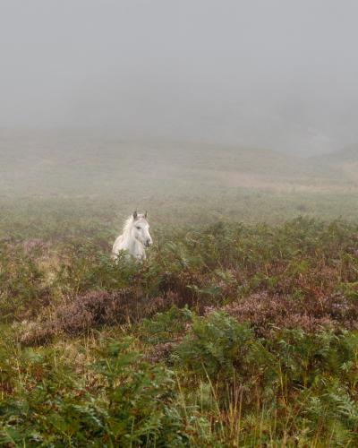 Roger Craven A dreich day on the Long Mynd