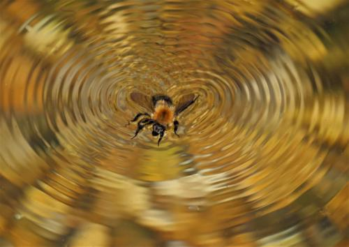 15 5th Place Int Buzzing Bee by Simon Blackmore