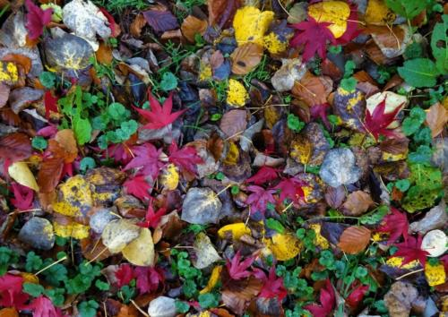 17 HC Int Colours of Autumn by Chrissie Blackmore
