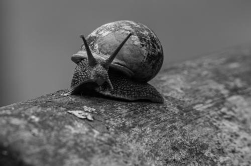 13 Intermediate 3rd Place Garden Snail Prowling by Andy Brooks