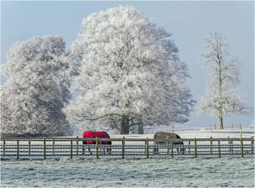 18 HC Int Frost on the Pasture by Colin Macklin