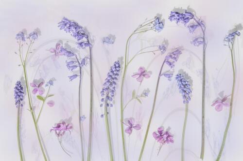 07 HC Adv The Joy of Spring by Fran Hartshorne