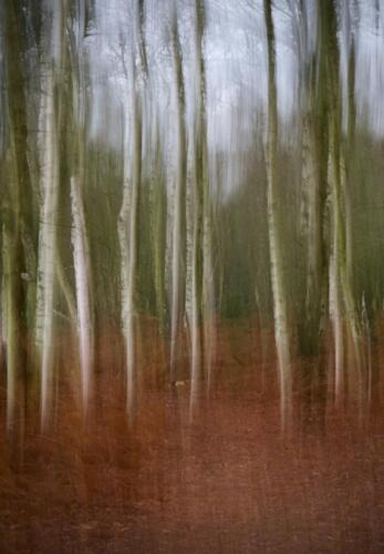 15 5th Place Int Winter Birch Wood by Sheila Morris