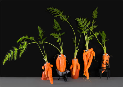 01 Adv 1st Place The Carrot Family by Maria Macklin