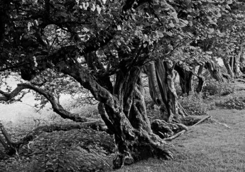 17 Int C  Ancient Woodland by Harry Cheadle