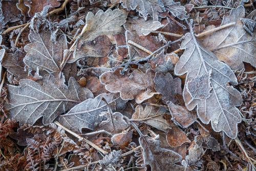Iced Tree Leaves by Mike Norton