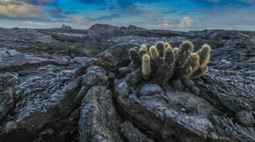 New Life on the Lava by Mick Richardson