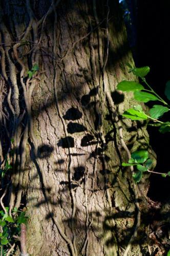 15 Intermediate HC Leafy Shadows by Sheila Morris