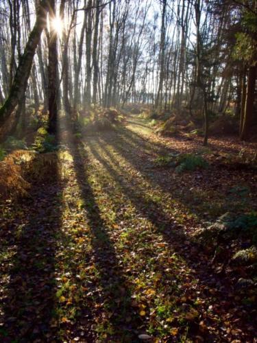 12 Intermediate 4th Place Winter Woodland Shadows by Sheila Morris