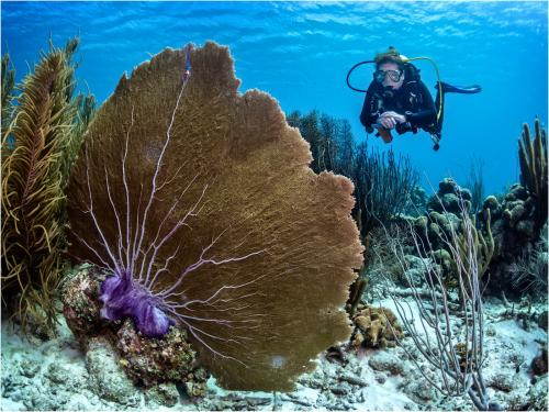 Diver and Fan coral by Dave Shrubb