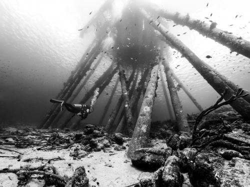 Under Salt pier (Bonaire) by Dave Shrubb