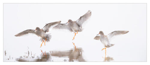 Redshanks Landing by Howard Broadbent