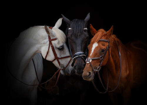 Stable Mates by Andy Brooks
