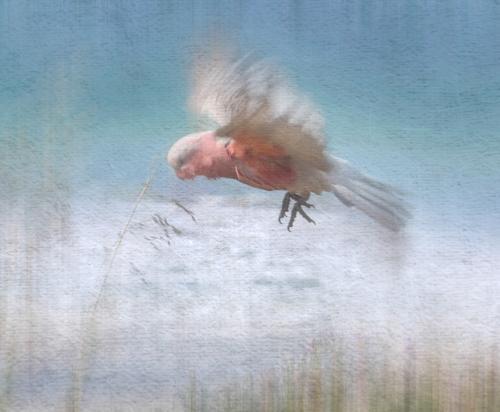 Adv 6th Coastal Flight by Fran Hartshorne