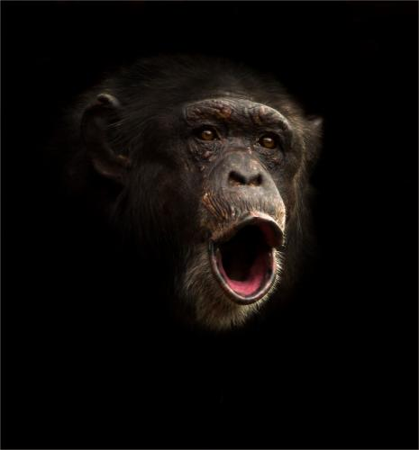 Int C. Chirpy Chimp by Mike Padden