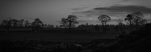 Int 2nd  Moon and Trees by Brian Kerrison