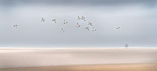 Adv, 1st Place, Oystercatchers, Cumbrian Coast by Richard Greswell